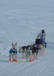 Dog team approaching with driver Karen Land