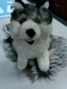 stuffed toy husky dog